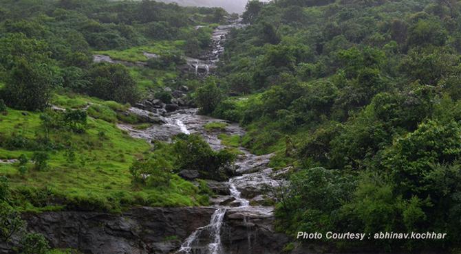 natural vegetation of maharashtra